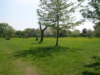 Croxley Green Stones Orchard